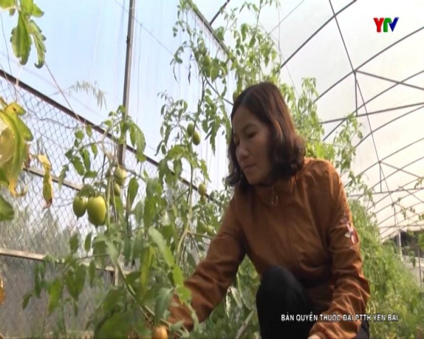 Kỹ sư trồng trọt say mê với nghề