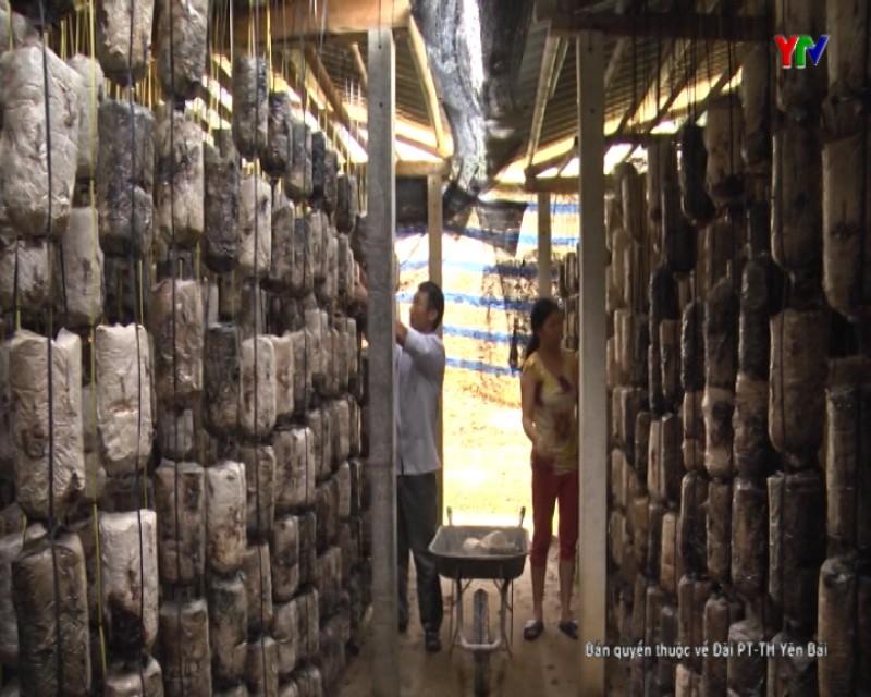Yên Bái nhân rộng hiệu quả đề tài ứng dụng sản xuất nấm