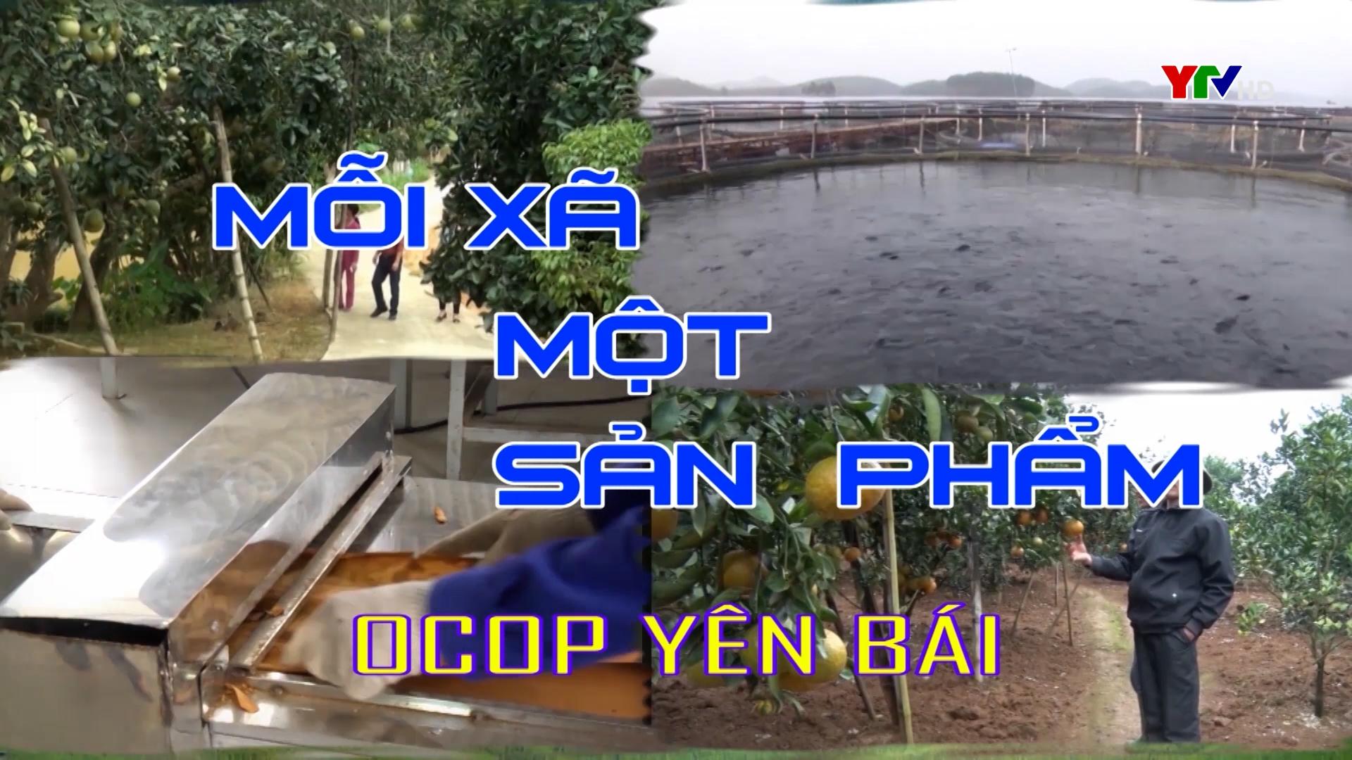 Xã Văn Phú phát triển vùng chanh tứ thời