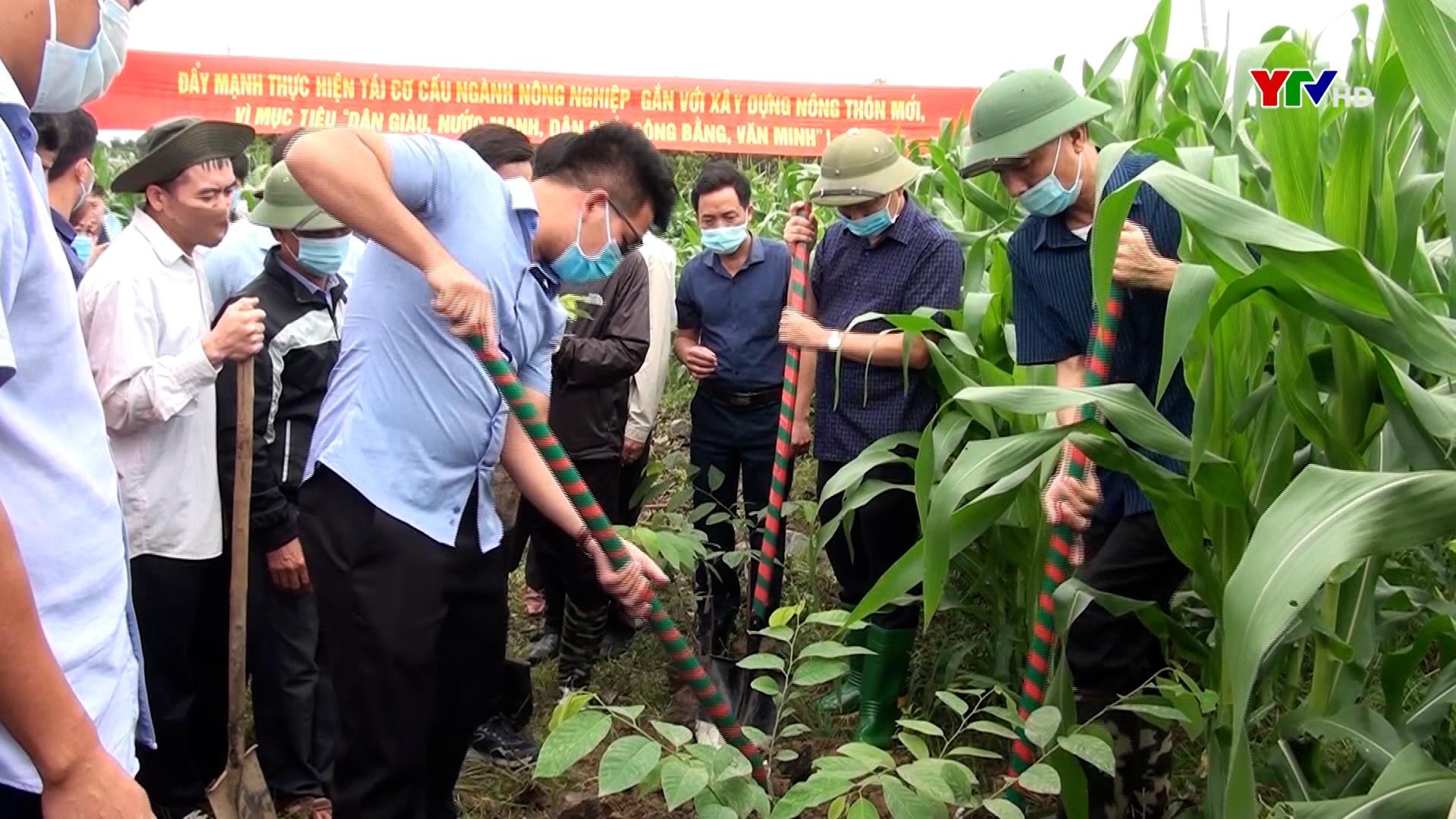 Văn Yên trồng thử nghiệm mô hình na Đài Loan