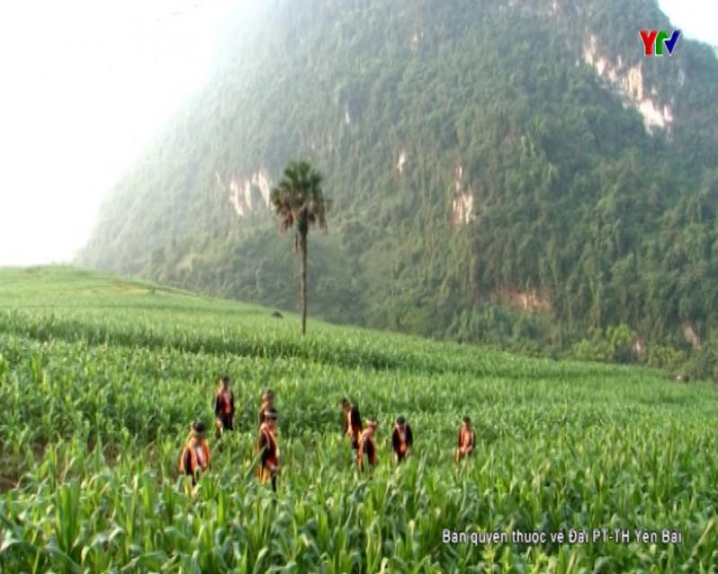 Bình nguyên xanh Khai Trung