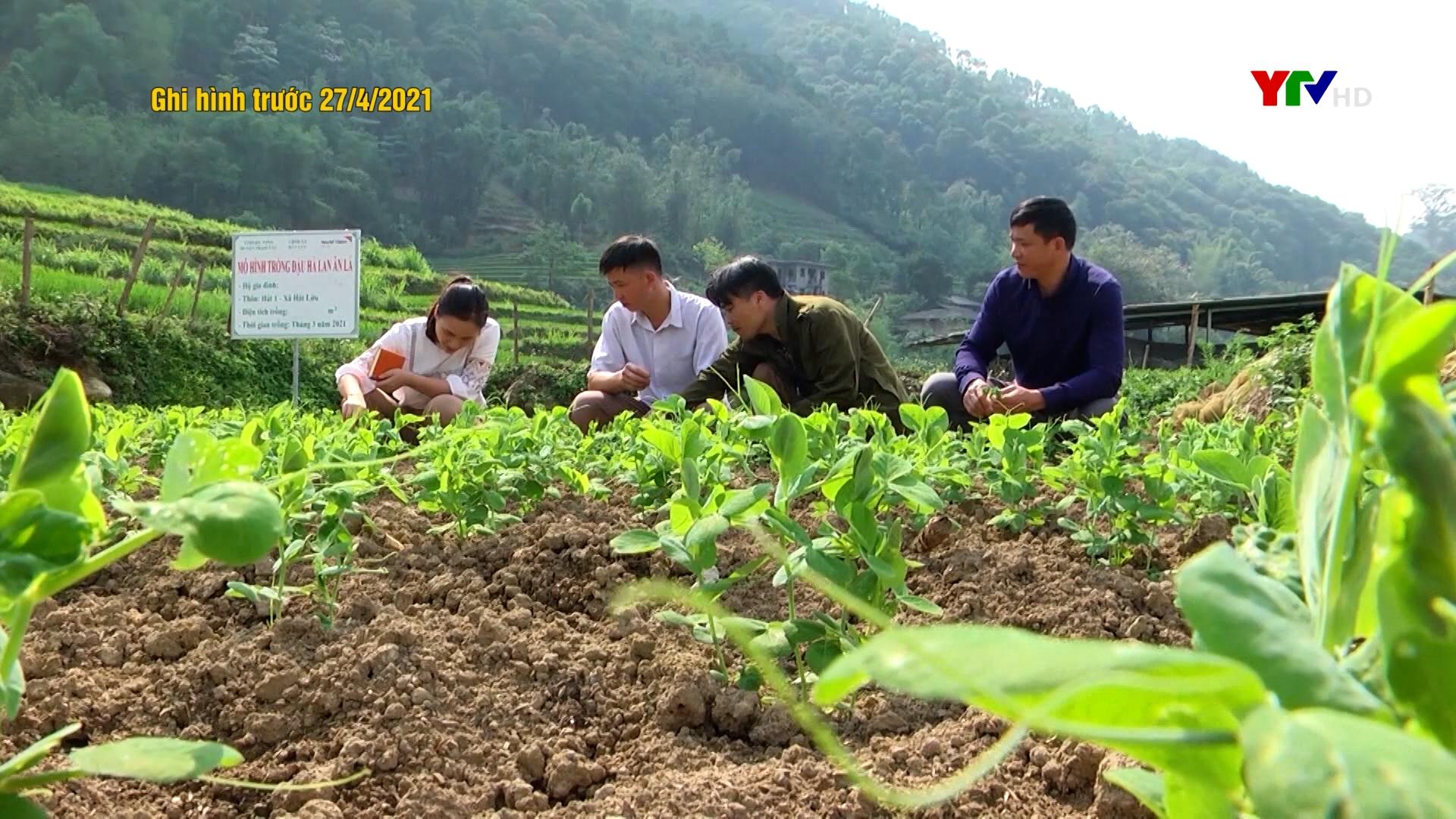 Hiệu quả chính sách hỗ trợ nông nghiệp ở vùng cao Trạm Tấu