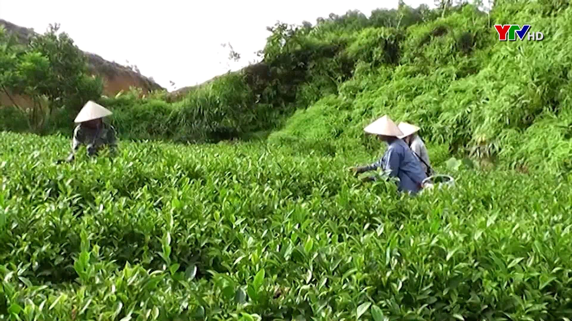 Yên Bái phấn đấu giá trị tổng sản phẩm nông lâm nghiệp và thủy sản đạt trên 9.600 tỷ đồng