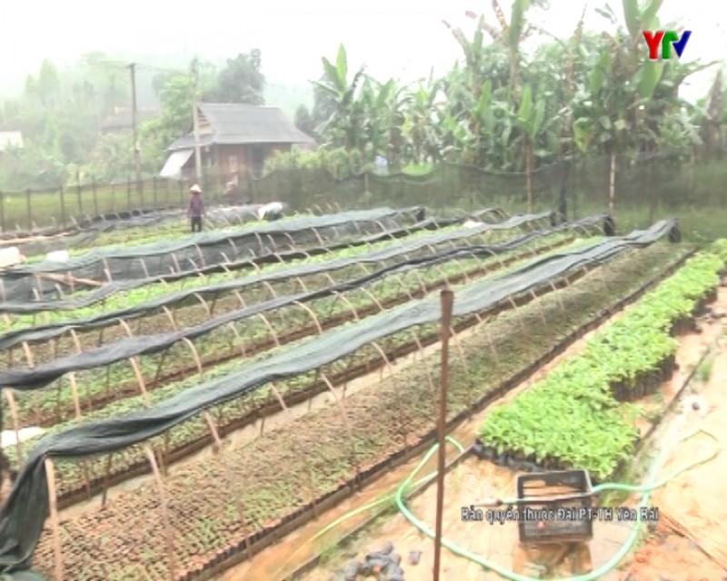 Mô hình thanh niên khởi nghiệp ở xã Hồng Ca, huyện Trấn Yên