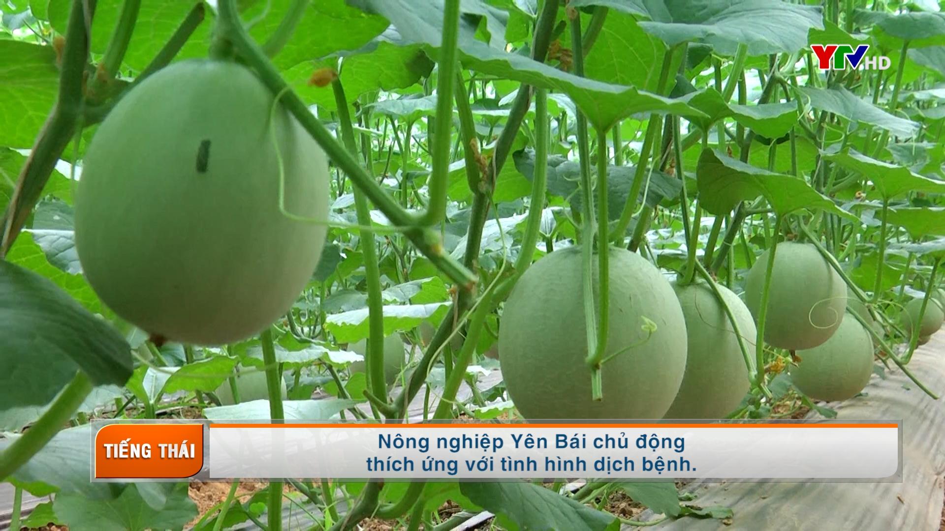 Tạp chí truyền hình tiếng Thái số 2 tháng 6 năm 2021