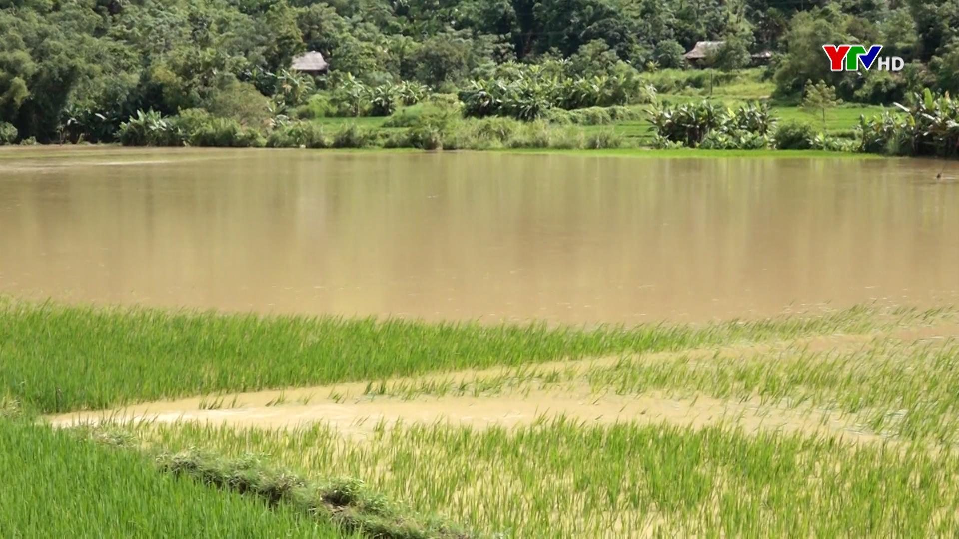 Lục Yên: Mưa lớn làm thiệt hại 122 lúa và hoa màu