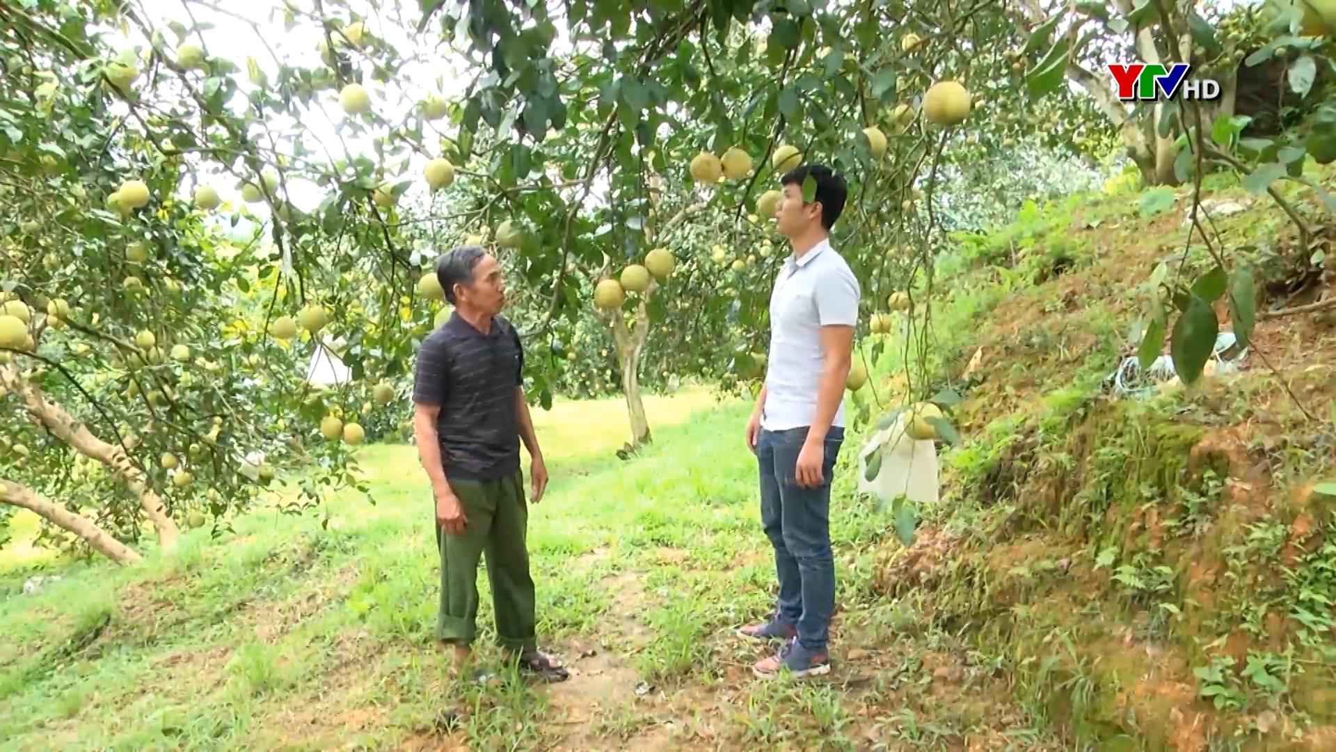 Huyện Yên Bình đánh giá 4 sản phẩm OCOP
