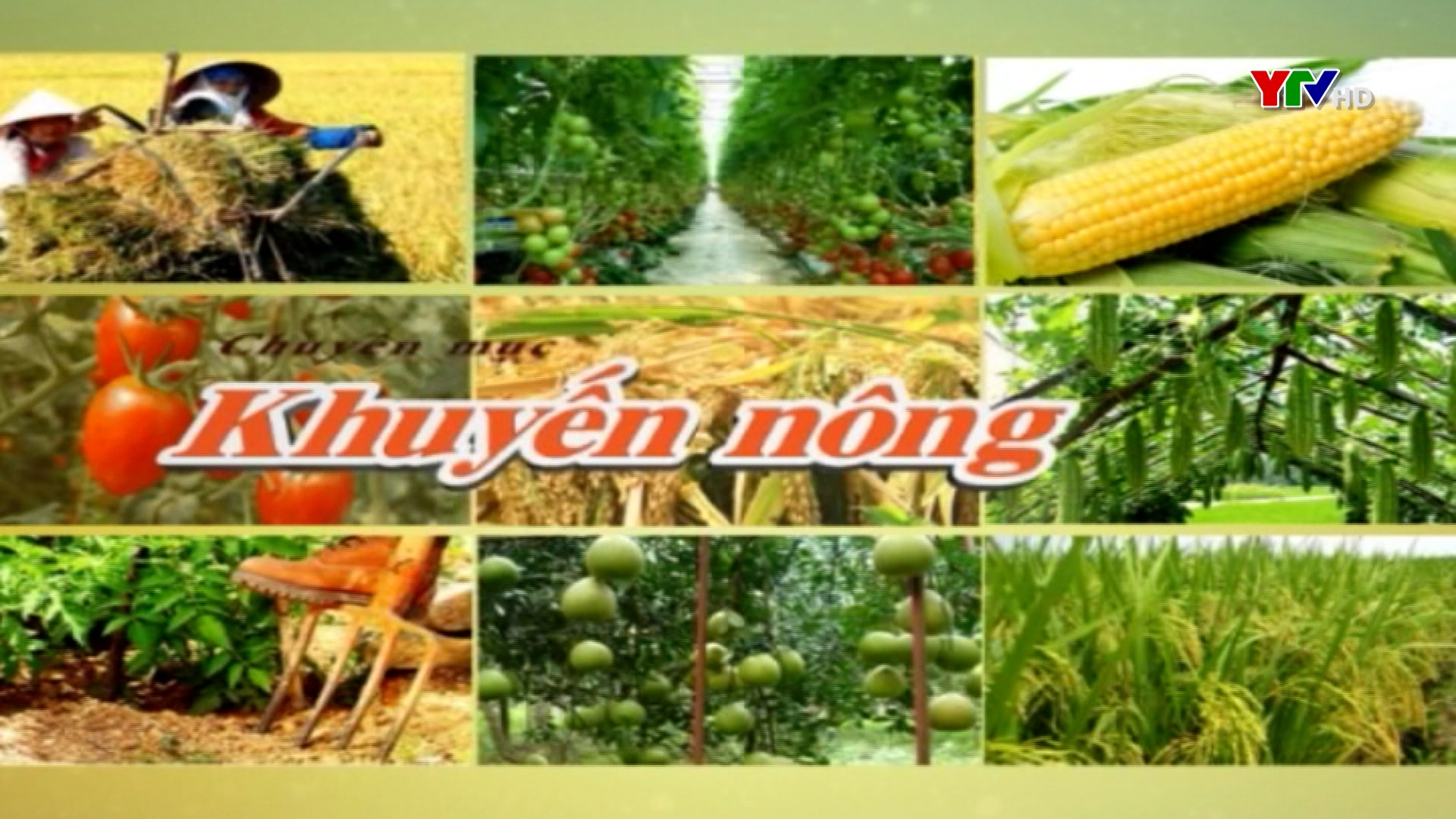 Xây dựng thương hiệu mật ong Minh Bảo
