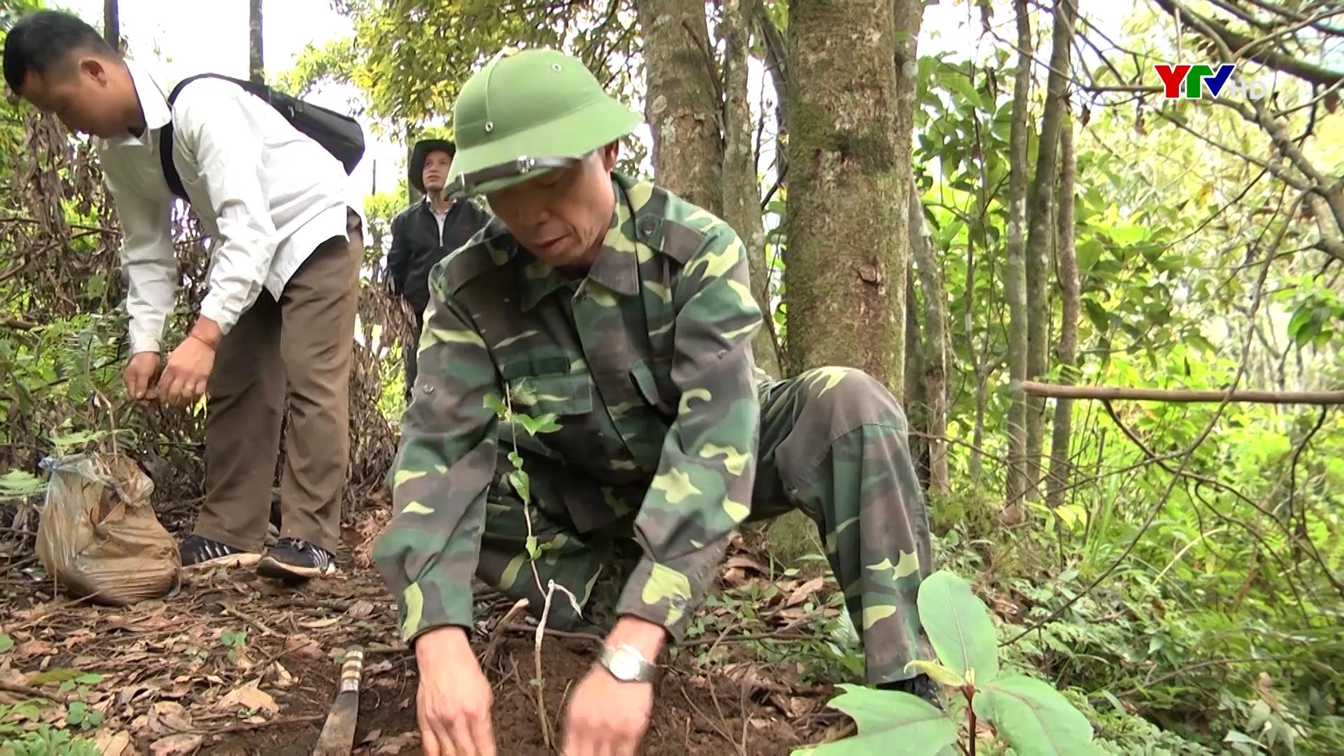 Huyện Trạm Tấu trồng mới 100 ha rừng