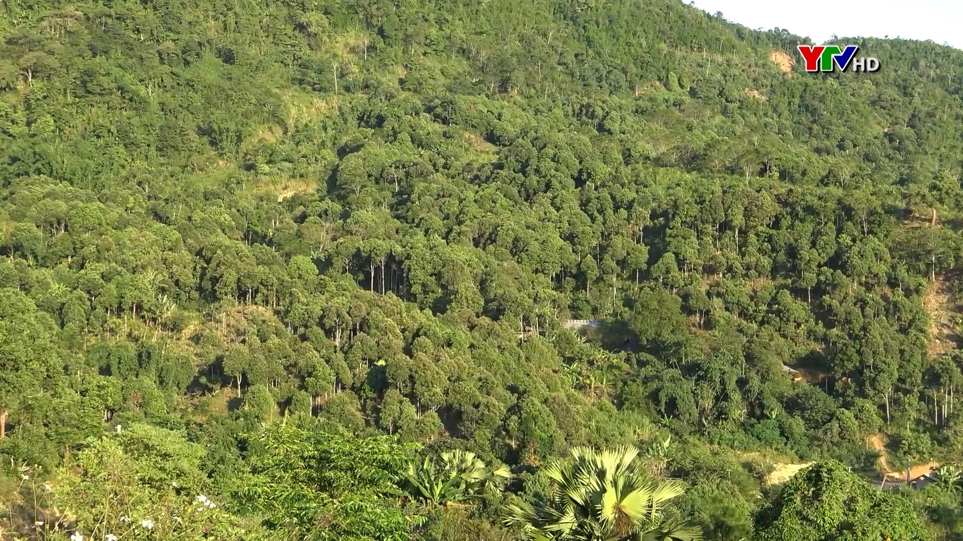 Xã Nậm Mười, huyện Văn Chấn tích cực bảo vệ rừng