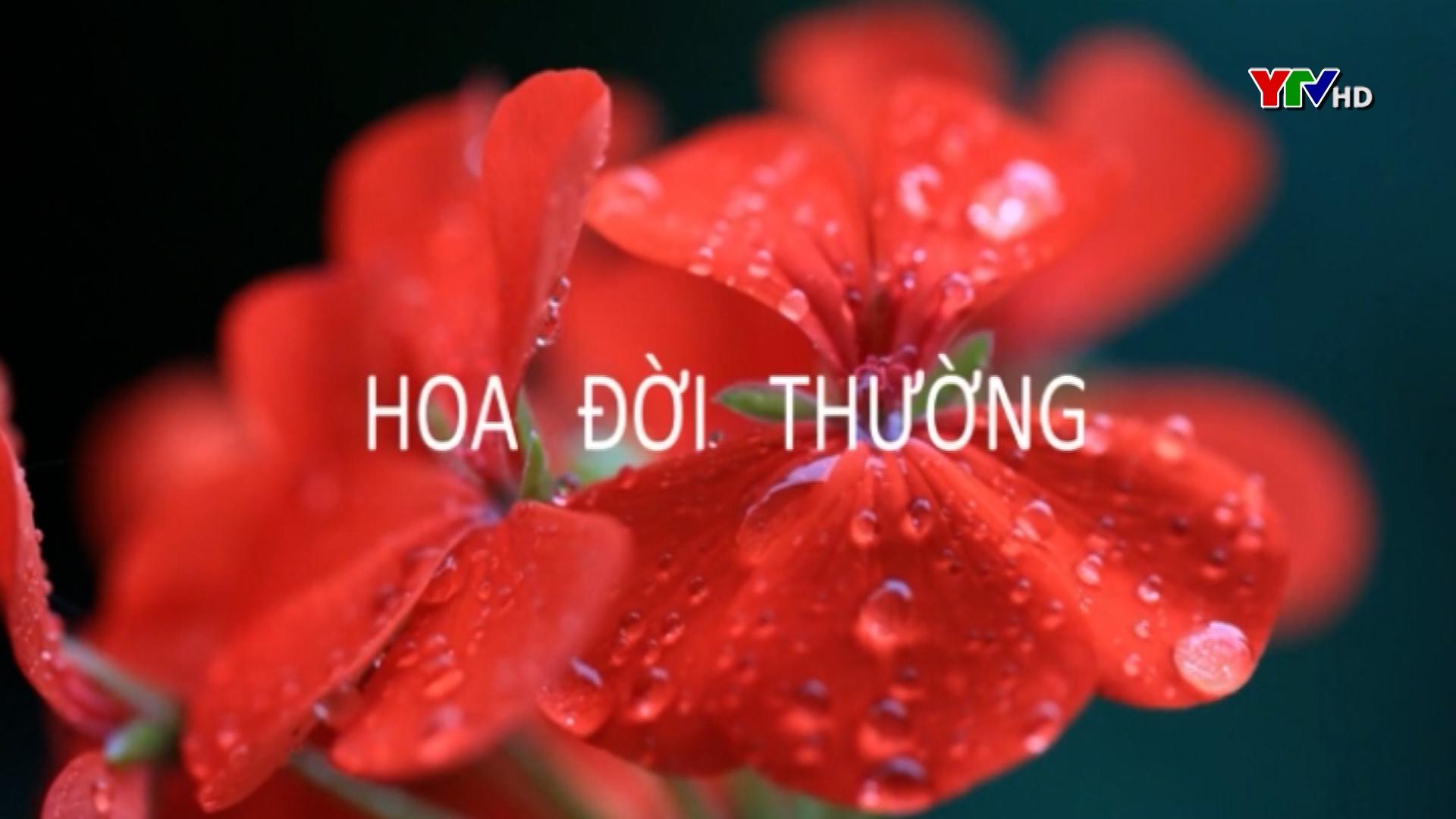 Hương Quỳnh -  Cô gái đam mê nghệ thuật múa