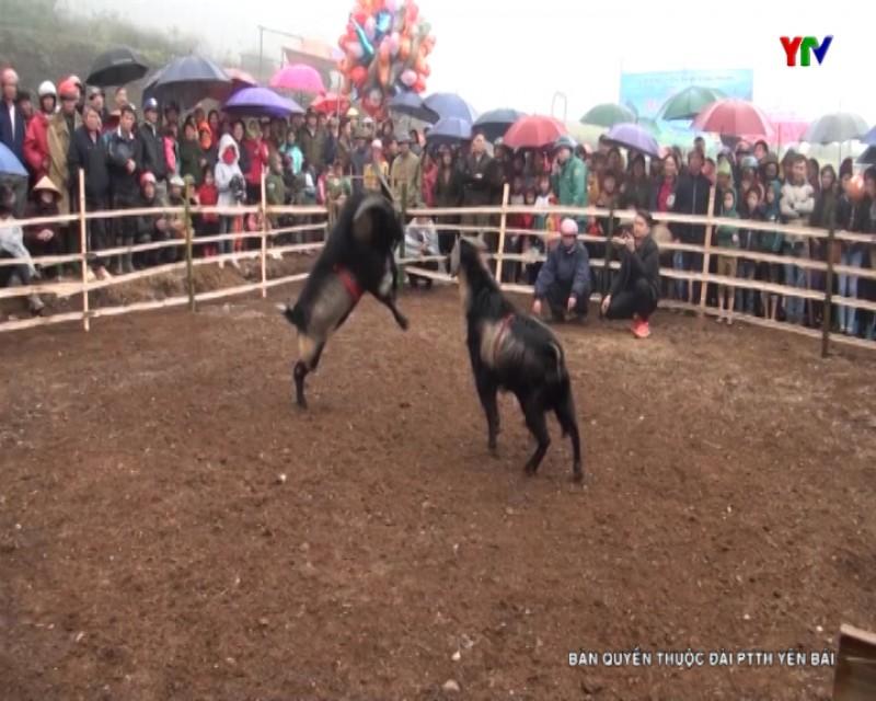 Độc đáo Hội chọi dê tại xã Khai Trung, huyện Lục Yên